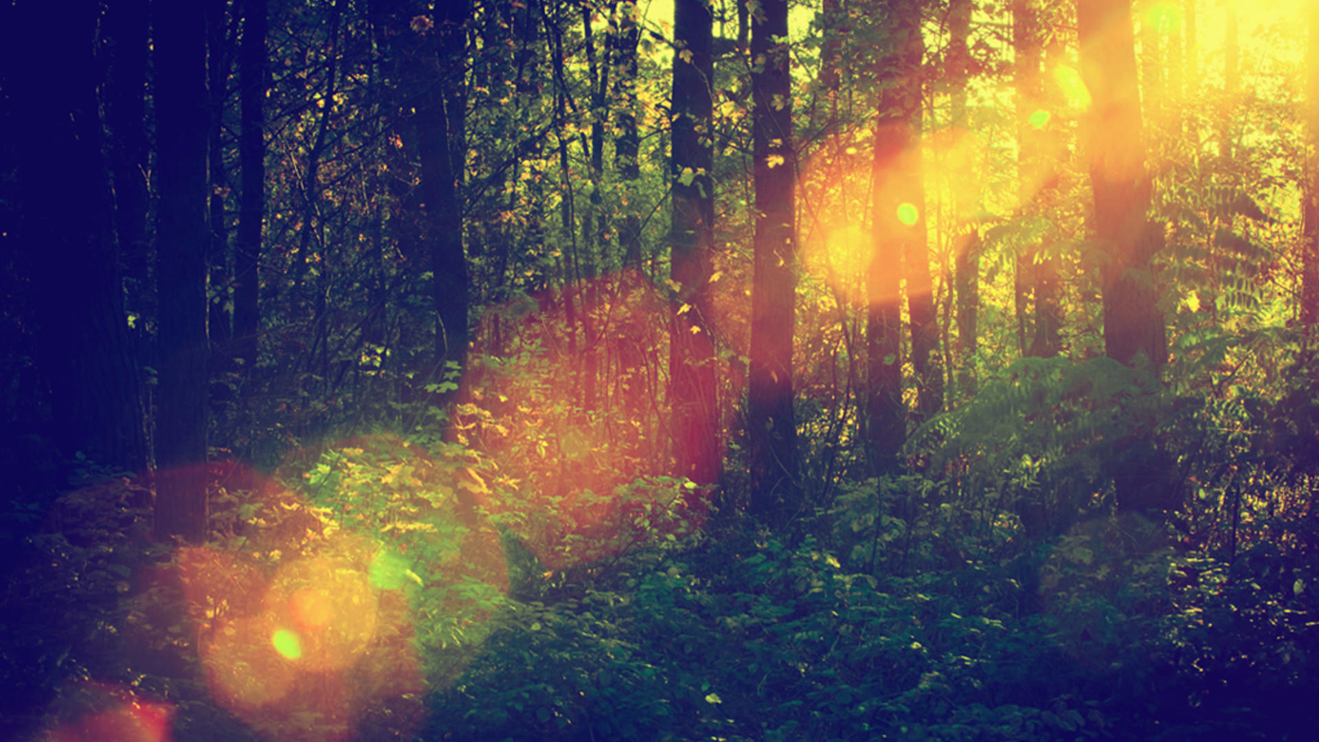 heptagone carrusel bosque